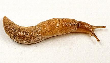 Slug alert!!! Get Nemaslug