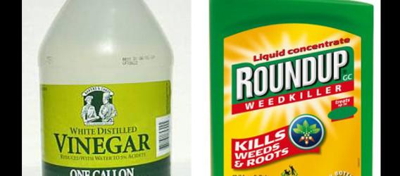 Vinegar instead of Roundup as weed killer